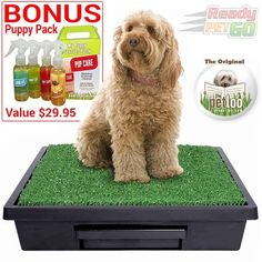 The Pet Loo at ReadyPetGo Australia also have a bonus puppy pack. Large Dogs, Small Dogs, Dog Toilet, Toilet Training, Dog Products, Puppy Love, Australia, Puppies, Pets