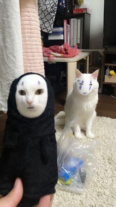 Cute Little Animals, Cute Funny Animals, Cute Cats, Funny Cats, Animals And Pets, Baby Animals, Cat Memes, Funny Memes, Cat Aesthetic