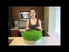 How to Grow Wheatgrass SOILESS - BEST VID - FYI Baking soda changes the PH levels so the little nasties do not grow on the plants. Changing the water also helps prevent other nasties from growing.
