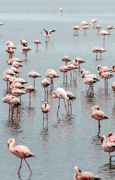 A group of flamingoes in Namibia. Buy travel photos by award winning photographer Gary Arndt. 4x6 prints $3.99.