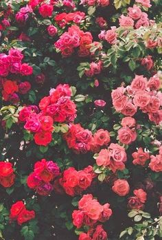 \\\ Flowers Pink \\\