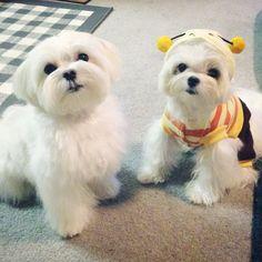Dog on left - good head grooming example