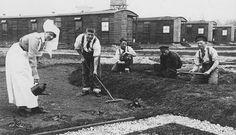 Olive Tree Genealogy Blog: Nursing Sister WW1 Photo Album: 14R landsccaping