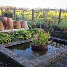 На изображении может находиться: растение, на улице и природа Pond, Water, Garden, Plants, Instagram, Water Water, Aqua, Garten, Water Pond