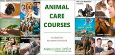Animal Care Courses. Accredited & Affordable Online & Practical Animal Courses