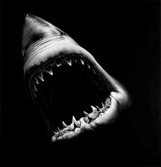 Robert Longo, Untitled (Big Shark). 2007.Charcoal on mounted paper. 731/8 x 70 inches/185.7 x 177.8cm. via http://http//www.robertlongo.com/portfolios/1014  Robert Longo is an American hyperrealist painter and sculptor best known for Men in the Cities, a series of charcoal and graphite drawings that showed monochromatic figures in various states of disarray. He recently published a book of work called Stand with Hatje Cantz Verlag, Germany.
