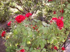 Размножаем черенкование красивые цветы