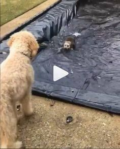 Funny Animal Videos, Videos Funny, Funny Animals, Viral Videos, Animals Dog, Animal Pictures, Cool Pictures, Funny Dogs, Funny Memes