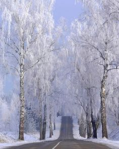 Winter road by ginaups  blue landscapes snow winter Lithuania road white beautiful frost light trees Winter road ginaups