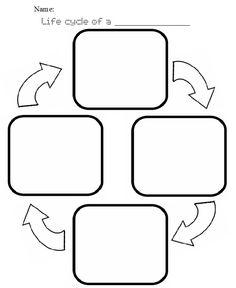 Plant Life Cycle Worksheet | life cycle