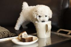 "Has no idea she is taking her life in her own paws...""Slowy step away from the coffee!"""