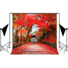 6.5x10ft Fall Photography Backdrops Maple Brown Wood Floor Autumn Defoliation Background 200x300cm