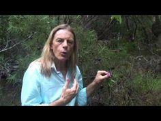 ▶ FRINGED VIOLET - Australian Bush Flower Essences YouTube