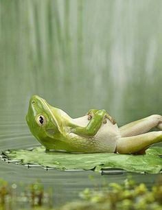 Cuz sitting on your hind legs is just too main stream... We'll done hipster frog.