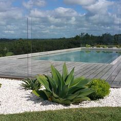 the grove byron bay - pool Backyard Pool Landscaping, Pool Fence, Glass Pool Fencing, Building A Swimming Pool, Swimming Pools, The Grove Byron Bay, Outdoor Gardens, Indoor Outdoor, Outdoor Spaces