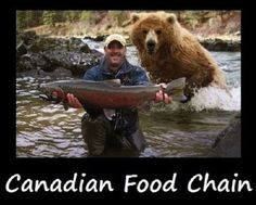 Look at My Big Fish! Why Are You Running Away? Bear Hunting Photobomb: This guy is in for a big surprise and will probably shit in his pants in 3 2 Animals And Pets, Funny Animals, Cute Animals, Funniest Animals, Animal Fun, Wild Animals, Tierischer Humor, Animal Pictures, Funny Pictures