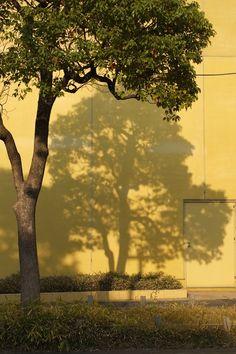 [2012.9.6] 나무 그림자 X-Pro1    나무 그림자가 노란 벽을 가득 채웠습니다.    이 사진을 보니 그림자도 근사한 피사체가 될 수 있다는 생각을 하게 되는데요.    군데군데 노랗게 변한 나뭇잎이 가을이 가까워옴을 알려주는 것 같네요^^    <사진정보>    촬영 모드 - Aperture-Priority Auto  감도 - ISO 200  다이나믹 레인지 - 100%  조리개 - f/4.0  셔터스피드 - 1/1000  초점거리 - 35.0mm  화이트 밸런스 - AUTO  필름 시뮬레이션 - PROVIA    http://blog.naver.com/fujifilm_x/150136735693