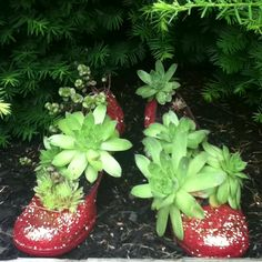 Wizard of Oz Ruby Slippers for my garden!