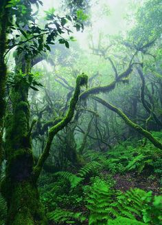 Garajonay National Park, Canary Islands