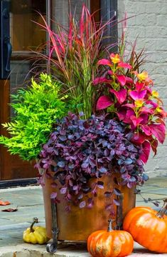 'Purple Pixie' Loropetalum, Lemon Lime' Nandina , 'Fireworks' Pennisetum (may substitute Japanese Blood Grass).
