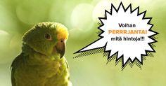 Voihan PERRRJANTAI mitä SUPERRRtarjouksia! Syksyn lomasuosikit tämän päivän ajan -150 € / aikuinen. Toimi nopeasti, alennus on voimassa vain tänään ja paikkoja rajoitetusti! #matkat #aurinkomatkat #matkailu #ALE #tarjoukset #loma Parrot, Bird, Animals, Parrot Bird, Animales, Animaux, Birds, Animal, Animais