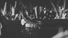 Black and white.  Grass and book props. Engagement ring picture. Minimal.