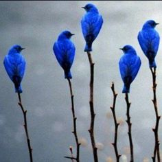 A Bird doesn't sing because it has an answer it sings because it has a song   Maya Angelo