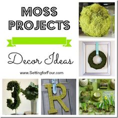 Moss Projects - Decor Ideas. Add a pop of color and texture to your home with Moss!