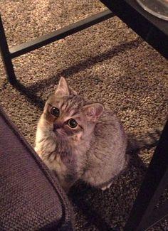 On a retrouvé le Chat potté de Shrek... dans la vraie vie !