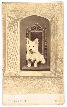 OLD CDV PHOTOGRAPH PET SCOTTIE DOG W. FISHER STUDIO FILEY YORKS ANTIQUE 1880S