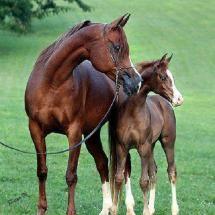 Gorgeous pair
