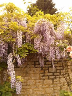 Witney England Witney Oxfordshire, Places Ive Been, Places To Visit, Britain, England, Flowers, Plants, Travel, Trips