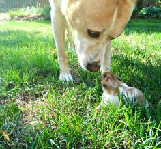 bridging the distance between dog and hamster