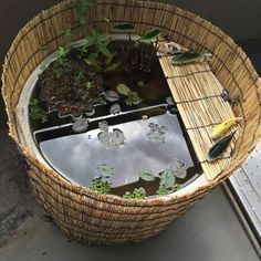 Container Water Gardens - Container water gardens and features plus small space landscaping Indoor Pond, Indoor Water Garden, Backyard Water Feature, Small Water Gardens, Container Water Gardens, Container Gardening, Koi Fish Pond, Fish Ponds, Japanese Water Feature
