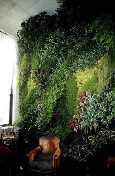 Matured living green wall, stunning Wow! I live Patrick Blanc's vertical gardens! His work is amazing!