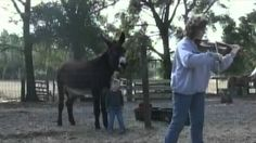 Donkey sings to a violin...