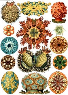 Ernst Haeckel's : Kunstformen der Natur: A naturalist illustrator and writer, Haeckel painted a variety of organisms including arachnids, turtles, bryozoa, sea anemones, and others.