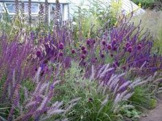 allium, salvia, grass - Love the different purples, heights, textures and shades of a color. by virgie Beautiful Gardens, Outdoor Gardens, Back Gardens, Allium Flowers, Planting Flowers, Wild Flowers, Salvia, Purple Garden, Purple Plants