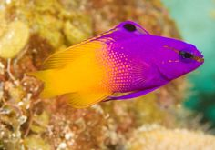 this is such a cool fish