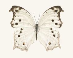 it looks like the butterfly from the butterfly clues without the blood