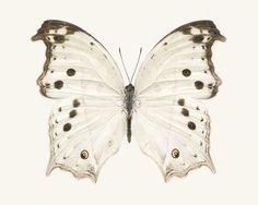 Butterfly Art Print, Neutral Wall Art, Wall Decor, White on White Art 5x7 8x10 11x14 or 16x20