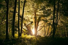 Everything Is Illuminated: Haunting Photos of Forests in Upstate New York