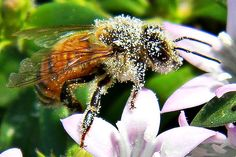 The Decline in Bees Will Cause a Decline in Healthy Food | TakePart