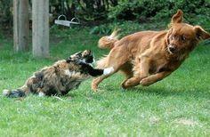 Timing perfeito - Fotos felinas tiradas no momento exato 5 06