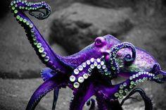 Purple Octopus Garden