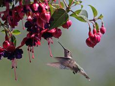 Kolibri: Der kleinste unter den Vögeln — Bild: Shutterstock / Don Roberts    www.einfachtierisch.de