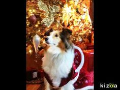 Kizoa Video Maker: Happy  Cristmas Cats & Dogs