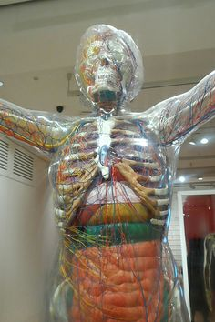 Transparent human body model at the Wellcome Collection in London: http://www.europealacarte.co.uk/blog/2013/05/20/photo-tour-wellcome-collection-london/