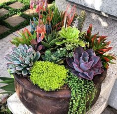 Succulents In Containers, Cacti And Succulents, Container Plants, Planting Succulents, Container Gardening, Planting Flowers, Succulent Landscaping, Succulent Gardening, Garden Yard Ideas