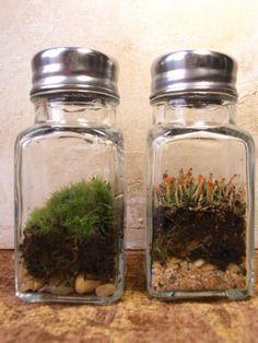 Salt Shaker Micro Terrariums by dandelion-daydreams #Terrariums #Salt_Shaker